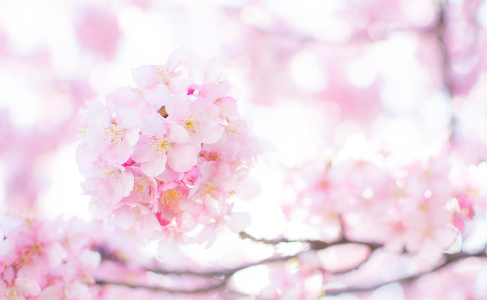 春季休業のお知らせ